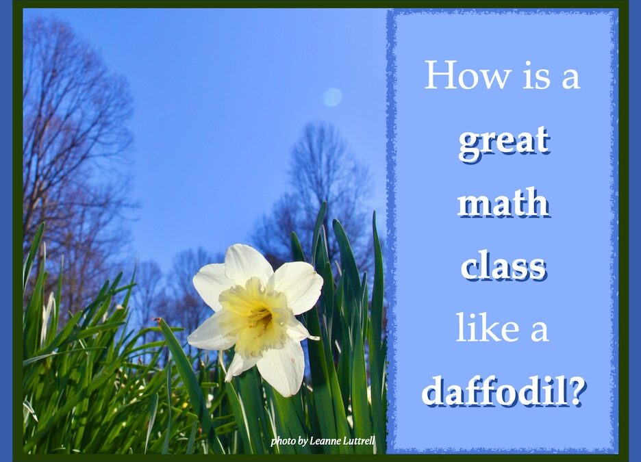How is a great math class like a daffodil?