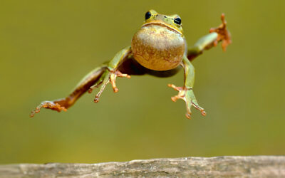 Celebrate National Frog Jumping Day Mathematically!